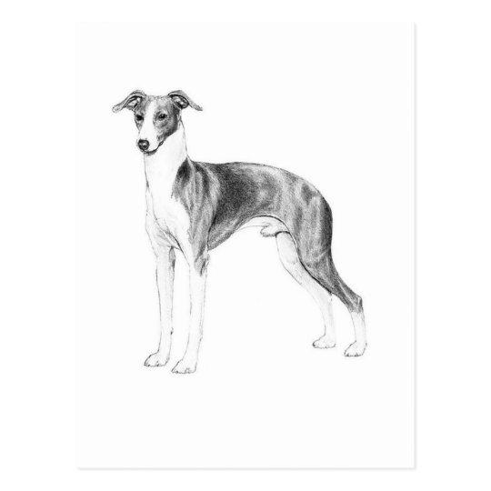 Italian Greyhound Style Postcard