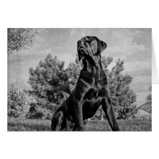 Italian Mastiff Card