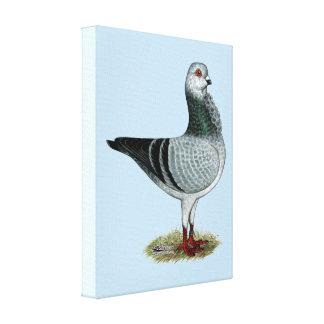 Italian Owl Grizzle Pigeon Canvas Print