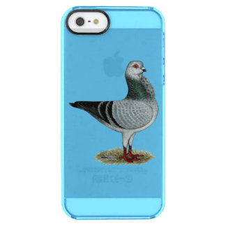 Italian Owl Grizzle Pigeon Clear iPhone SE/5/5s Case
