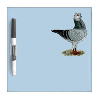 Italian Owl Grizzle Pigeon Dry Erase Board