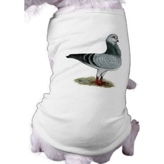 Italian Owl Grizzle Pigeon Shirt