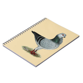 Italian Owl Grizzle Pigeon Spiral Notebook