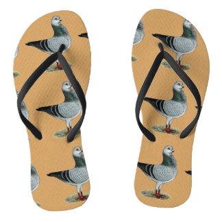 Italian Owl Grizzle Pigeon Thongs