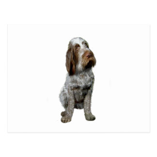Italian Spinone - Roan 1.png Postcard