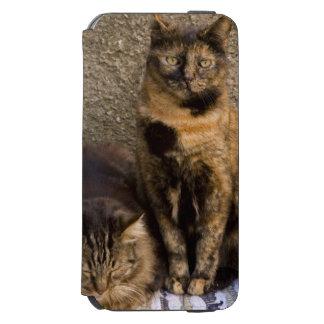 Italy, Cinque Terre, Vernazza. Three cats beside Incipio Watson™ iPhone 6 Wallet Case