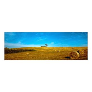 Italy landscape with tree photo