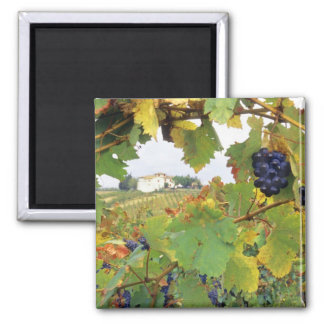 Italy, Tuscany Farmhouse viewed through Square Magnet