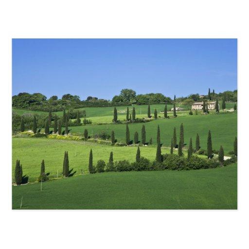Italy, Tuscany, Multepulciano. Cypress trees Post Card