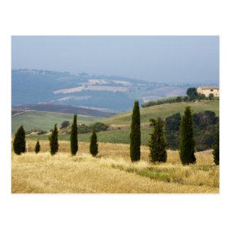 Italy. Tuscany. Pienza. Postcard