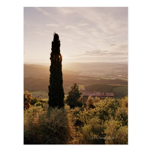 Italy,Tuscany,Val d'Orcia,Montalcino Post Cards