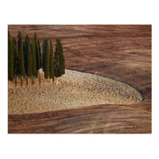 Italy,Tuscany,Val d'Orcia,San Quirico d'Orcia Postcard