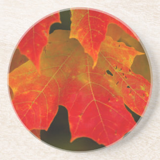 Itasca State Park, Fall Colors 2 Beverage Coasters