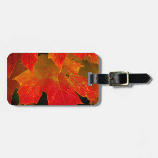 Itasca State Park, Fall Colors 2 Luggage Tags