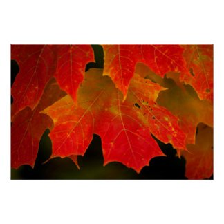 Itasca State Park, Fall Colors 2 Poster