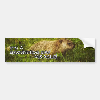 It's a groundhog day miracle bumper sticker