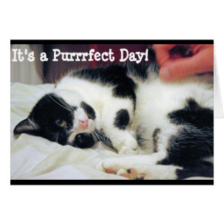 It's a Purrfect Day Card