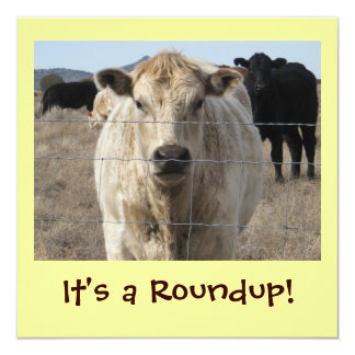 It's a Roundup! Cattle Drive Celebration Card