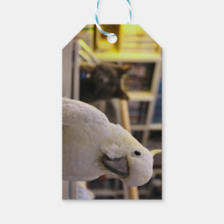 It's behind me...isn't it? gift tags