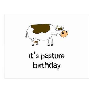 It's pasture birthday funny cow postcard