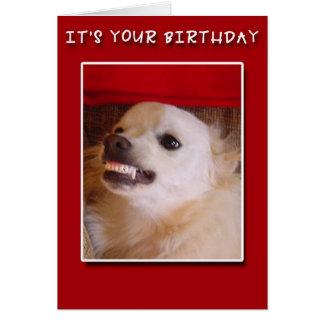It's Your Birthday! Grinning Dog Birthday Card