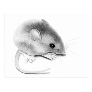 Itty Bitty Mouse Postcard