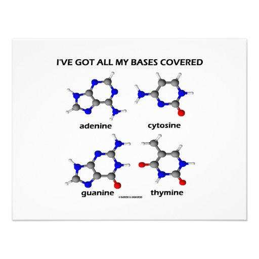 I've Got My Bases Covered (Chemistry DNA Bases) Announcement