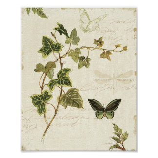 Ivies and Butterflies Poster