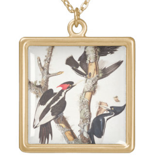 Ivory-billed Woodpecker, 1829, (print) Gold Plated Necklace