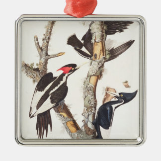 Ivory-billed Woodpecker, 1829, (print) Silver-Colored Square Decoration