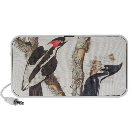 Ivory-billed Woodpecker, 1829, (print) iPod Speakers