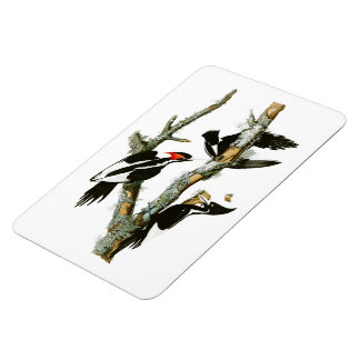 Ivory-billed Woodpecker Audubon Birds of America Magnet