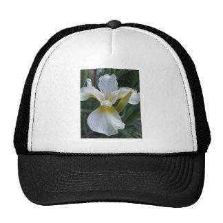 Ivory Iris Cap