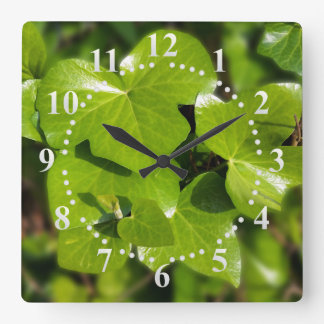 ivy in the sun clock