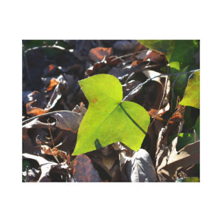 Ivy Leaf Stretched Canvas Print