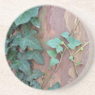ivy on tree coaster