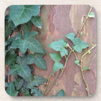 ivy on tree drink coaster