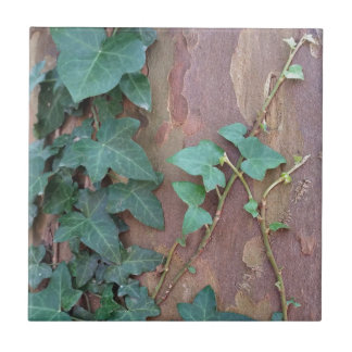 ivy on tree small square tile