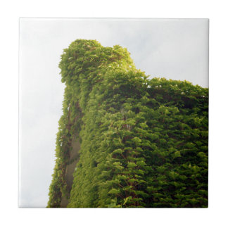 Ivy to the Sky Ceramic Tile