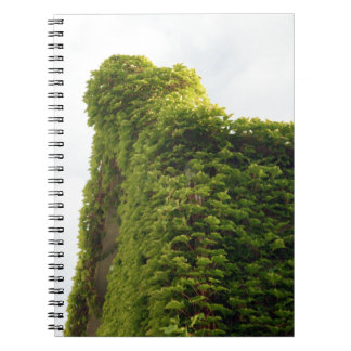 Ivy to the Sky Notebooks