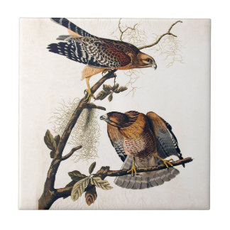 J.J. Audubon (Red Shouldered Hawk) (1829) Ceramic Tile