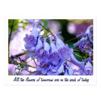 Jacaranda Blossoms Postcards