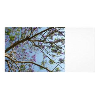 jacaranda tree branches flowers sky photo greeting card