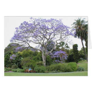 Jacaranda Tree Greeting Card