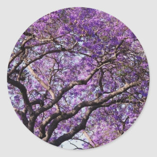 Jacaranda tree in spring bloom flowers round sticker