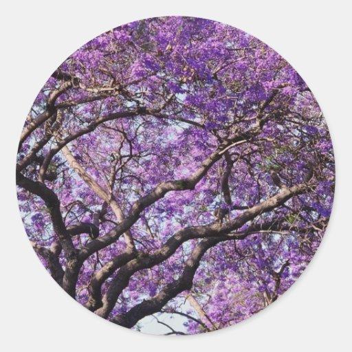 Jacaranda tree in spring bloom flowers round stickers
