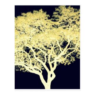 Jacaranda Tree Postcard