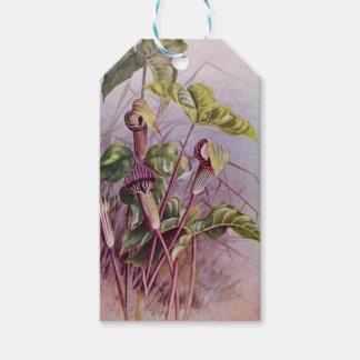 Jack-in-the-Pulpit Vintage Botanical Gift Tags