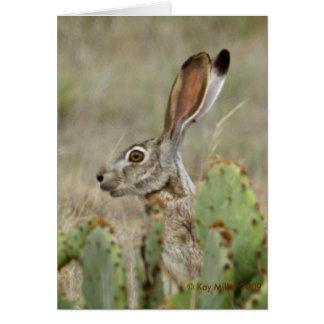Jack Rabbit - Cactus - 2 - 2009 Greeting Card