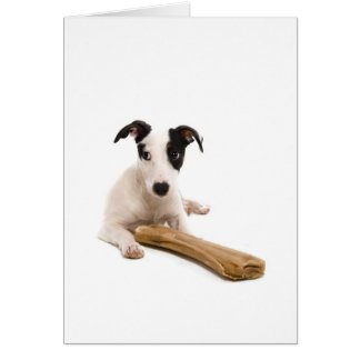 jack russel and his bones card